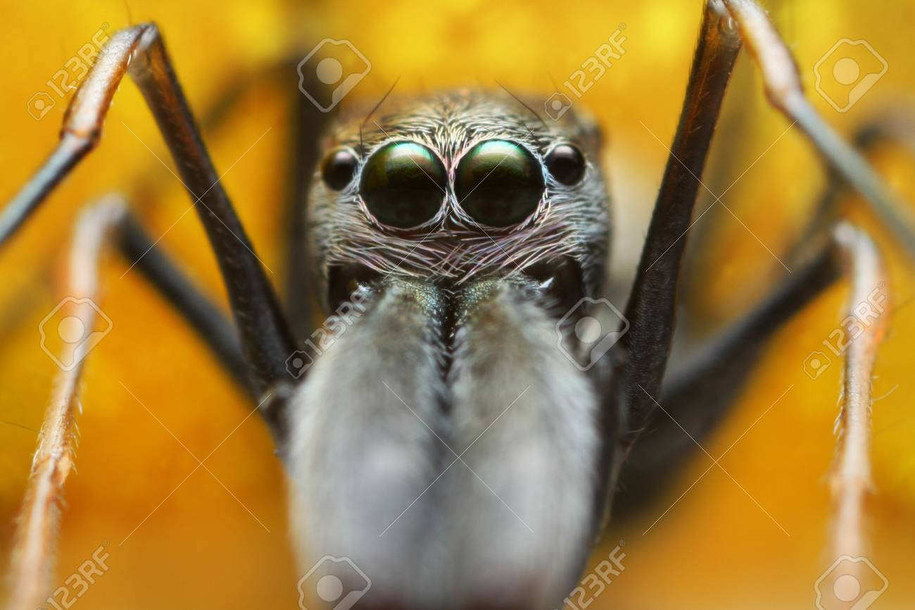 Face Spider Stock Photo - 17386637
