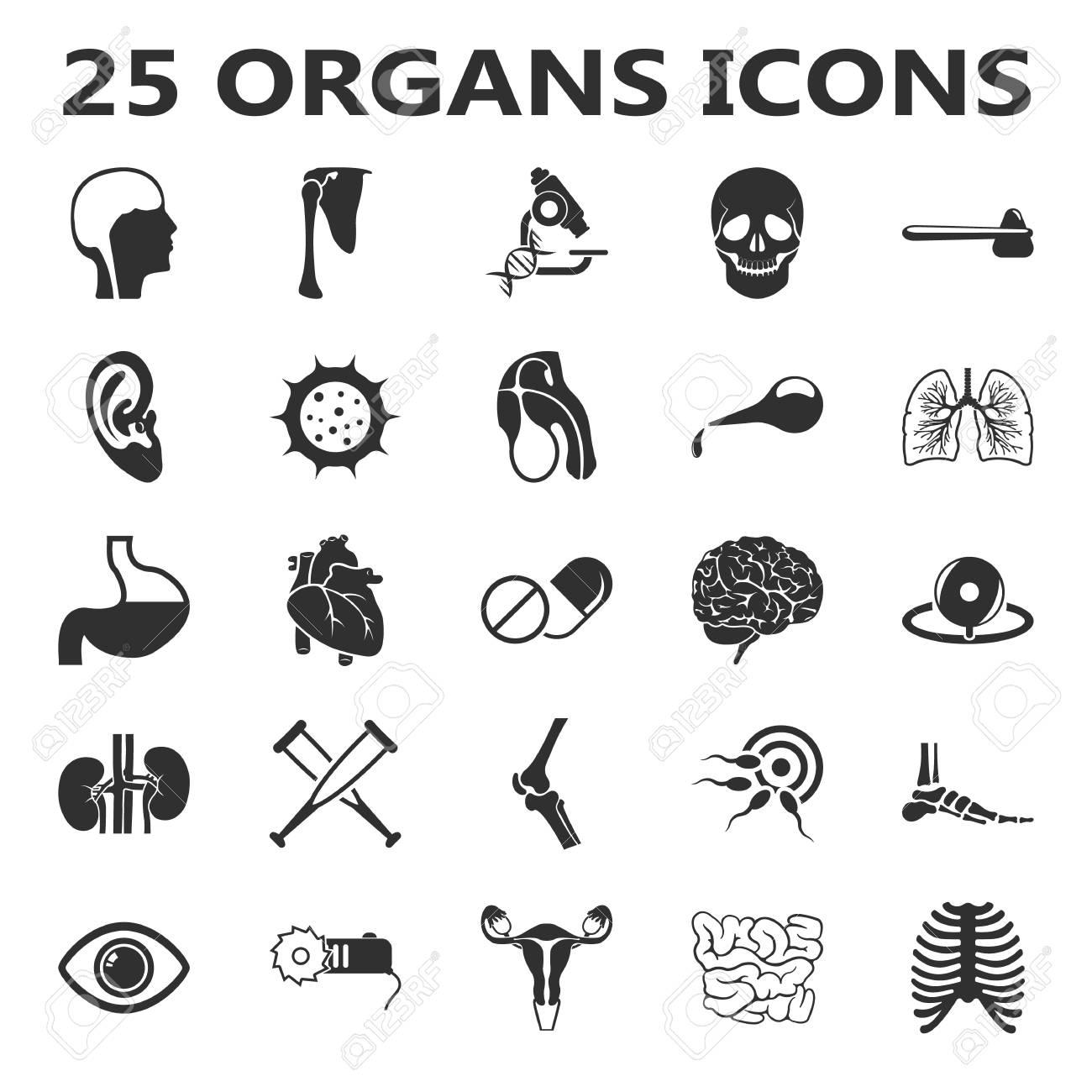 Rganos Conjunto De 25 Iconos Simples Negros. Cuerpo, Anatomía ...