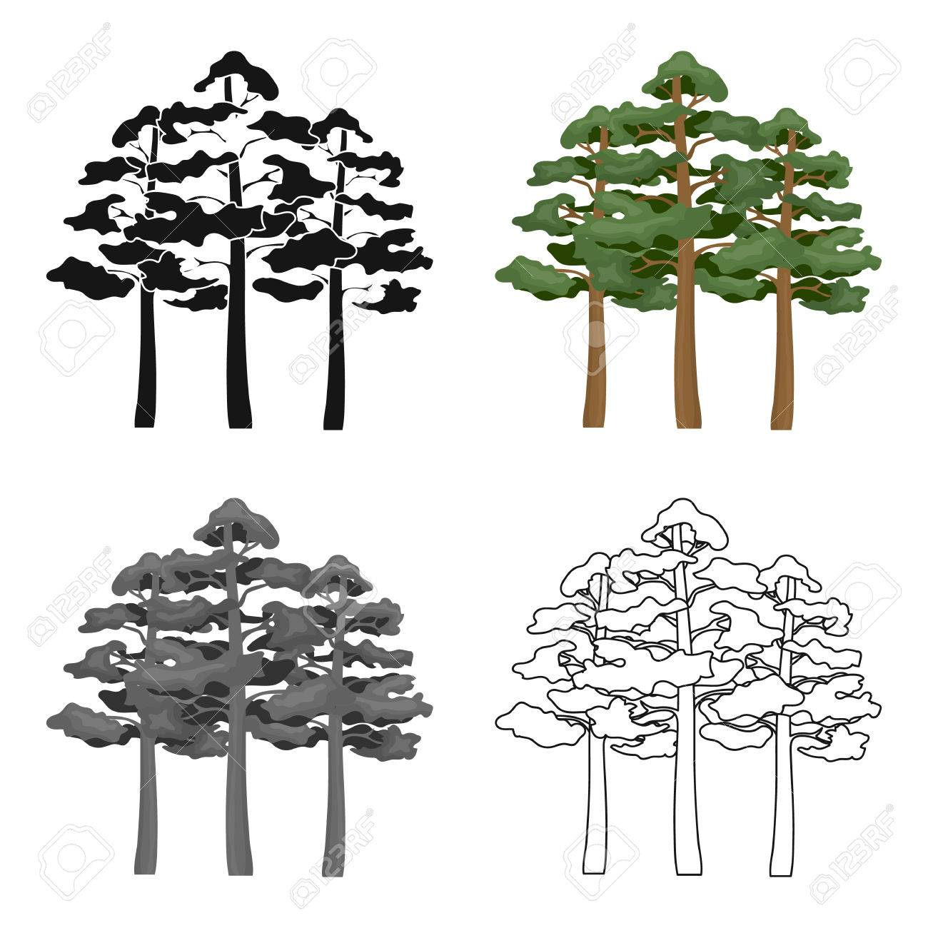 Pine vector icon in cartoon style for web - 77326367
