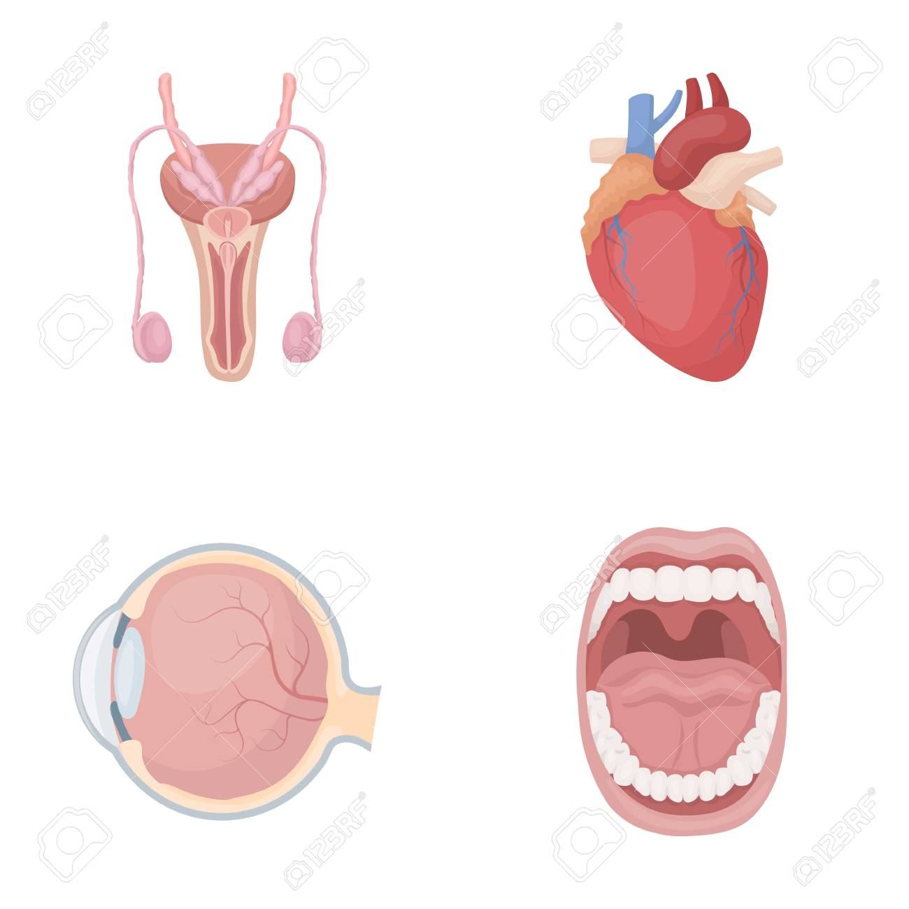 Male System, Heart, Eyeball, Oral Cavity. Organs Set Collection ...