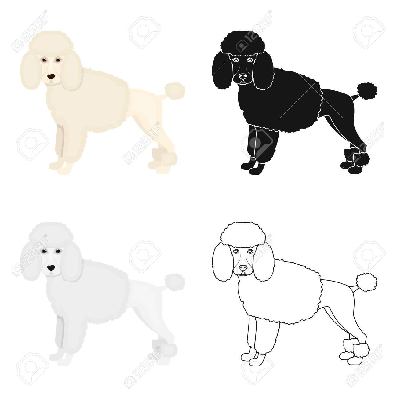 Caniche Solo Icono En Estilo De Dibujos Animados Poodle Vector
