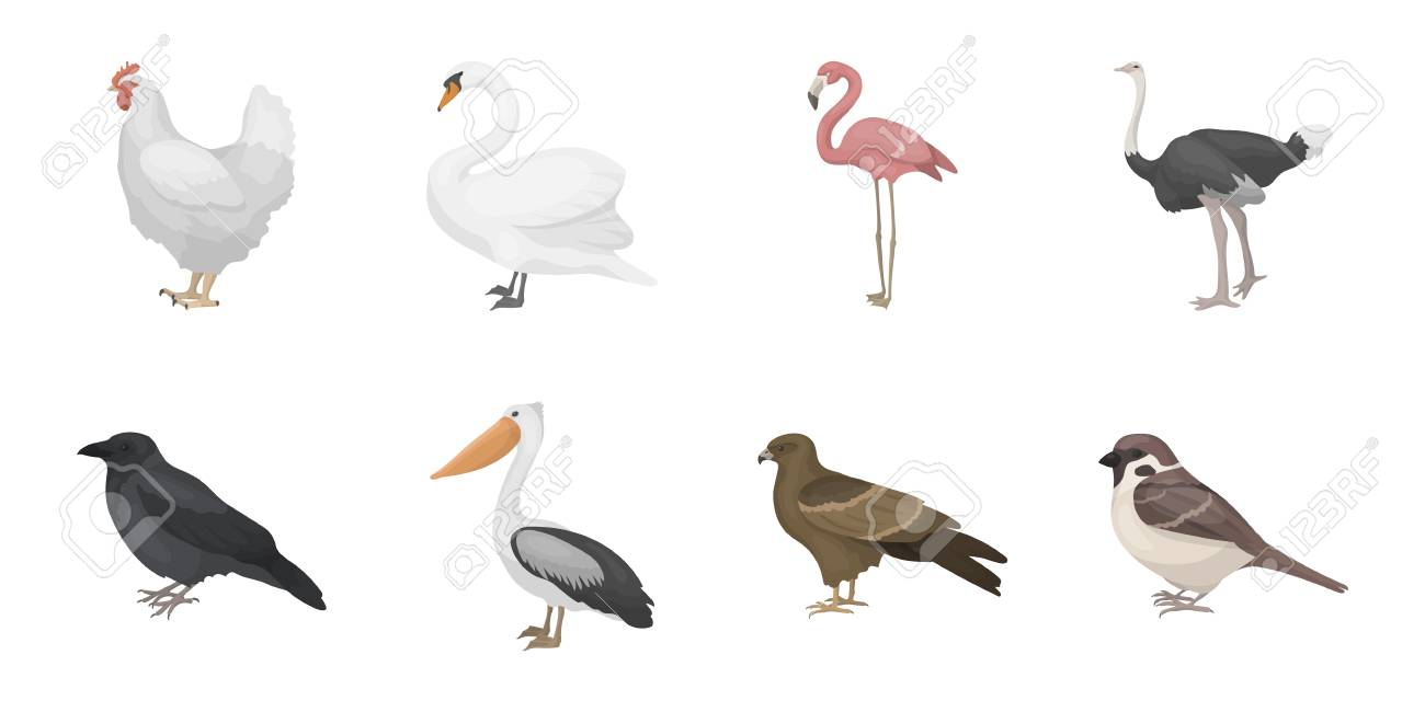 Types of birds icons in set collection for design. Home and wild bird vector symbol stock web illustration. - 88760239