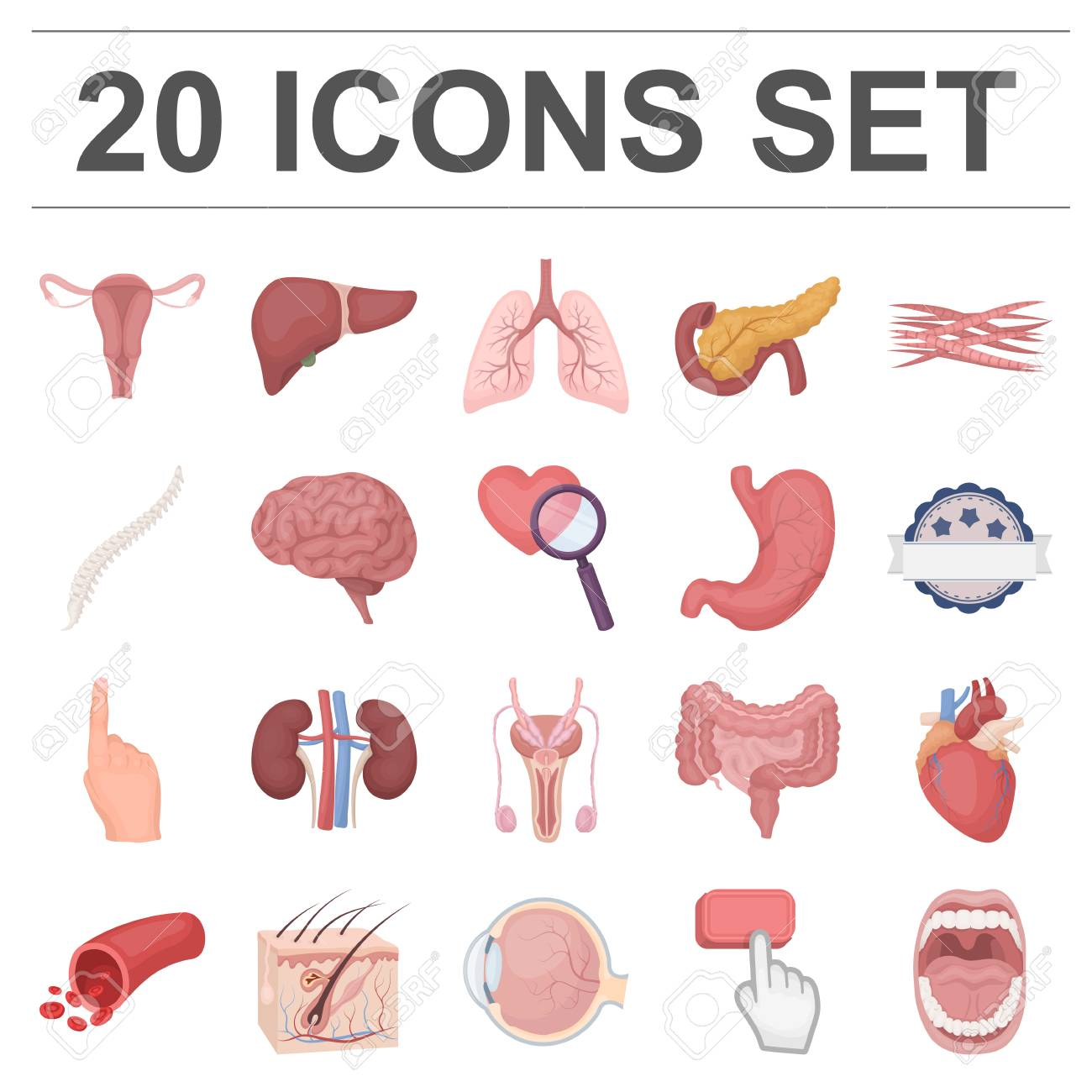 Internal Organs Of A Human Cartoon Icons In Set Collection For