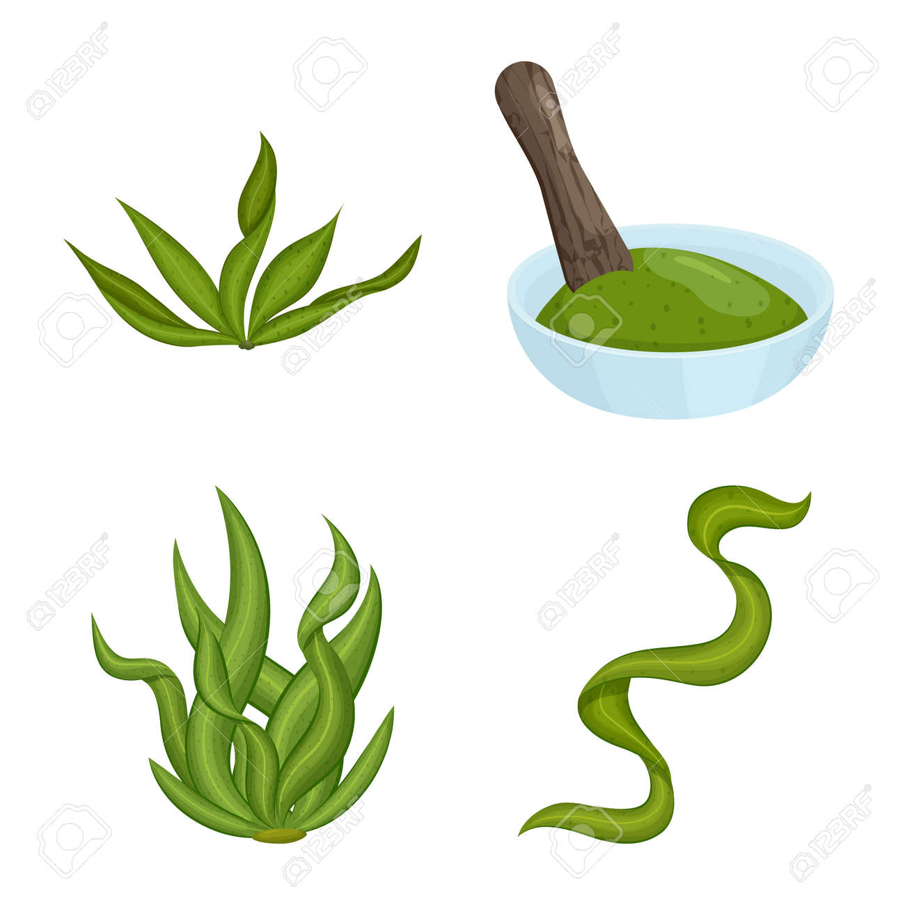 Vector illustration of spirulina and seaweed icon. Set of spirulina and vegan stock vector illustration. - 143496096