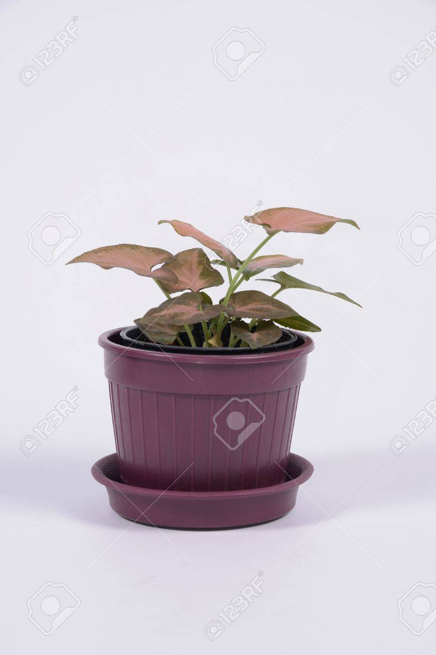 Small plant for office desk Office Space Small Plant Fix To Office Desk On White Background Stock Photo 18726167 Vectorstock Small Plant Fix To Office Desk On White Background Stock Photo