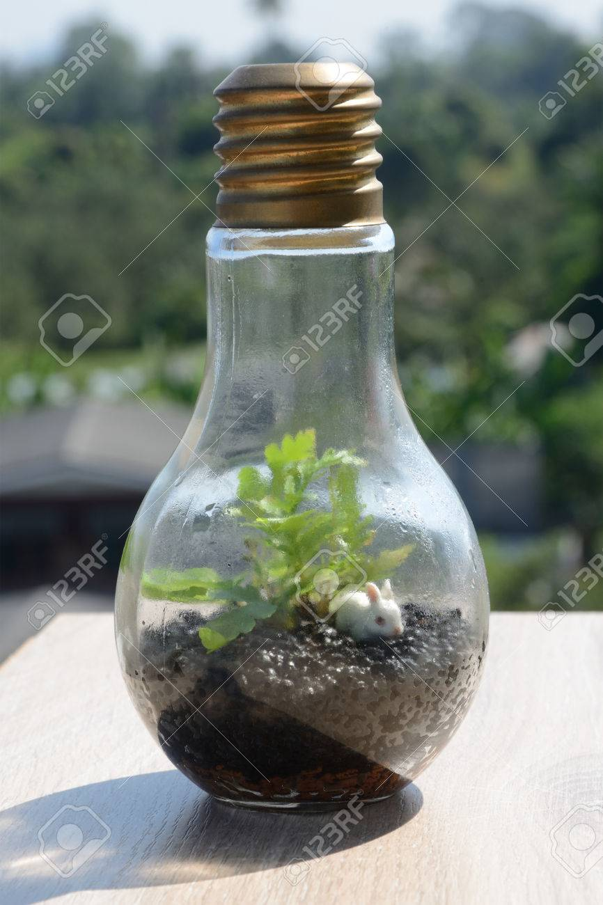 Terrarium In Bulb Shape On Wooden Table In Nature Light Stock Photo Picture And Royalty Free Image Image 69332421