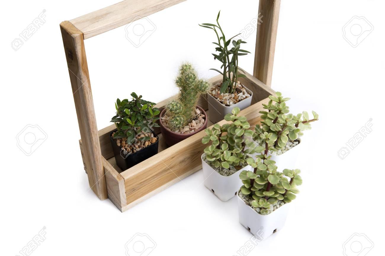 Beau Banque Du0027images   Idée De Décoration En Utilisant Divers De Cactus Et De  Petite Plante Avec Plante Du0027intérieur En Bois.