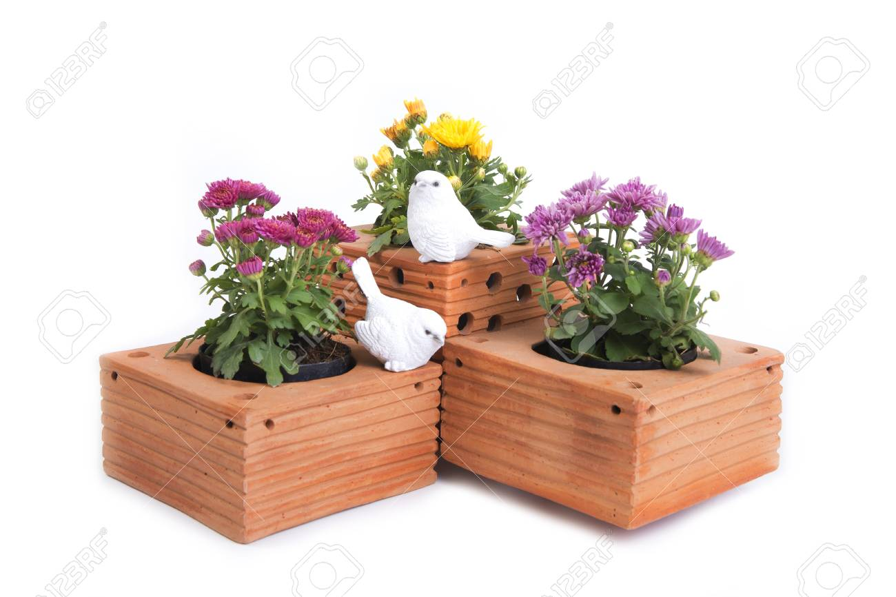 Stock Photo - Three of chrysanthemum in clay brown square flower pot with two little white bird statues on a white background.  sc 1 th 183 & Three Of Chrysanthemum In Clay Brown Square Flower Pot With Two ...