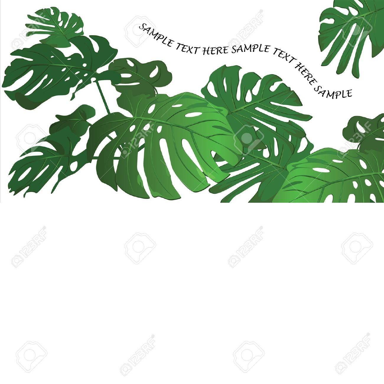 Huge leaves of a tropical flower monstera Stock Vector - 9426657