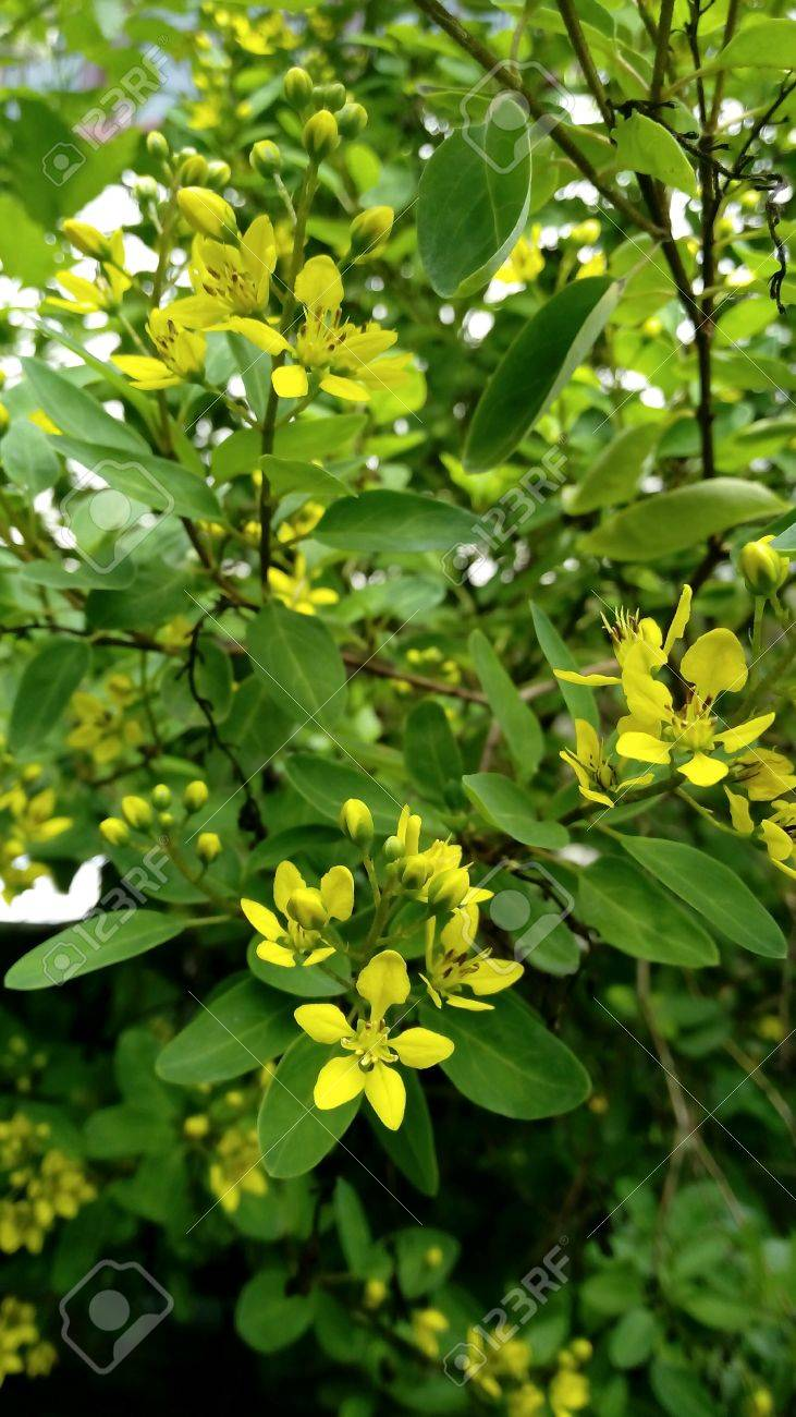 Yellow Tiny Flowers In Spring Stock Photo Picture And Royalty Free