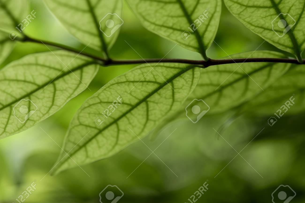 Hd Leafs Close Up Stock Photo Picture And Royalty Free Image Image 91698409
