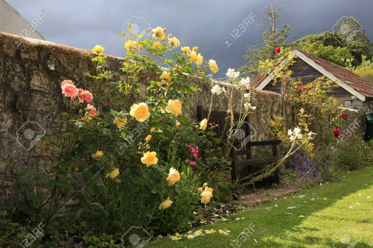 English Country Rose Garden And Approaching Storm Stock Photo
