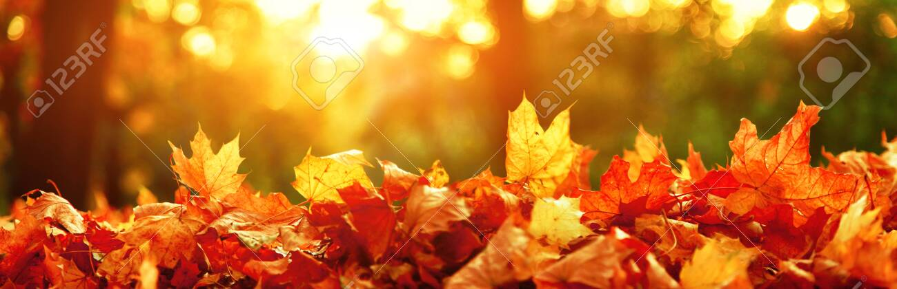 Beautiful autumn background with yellow and red leaves. - 157900954
