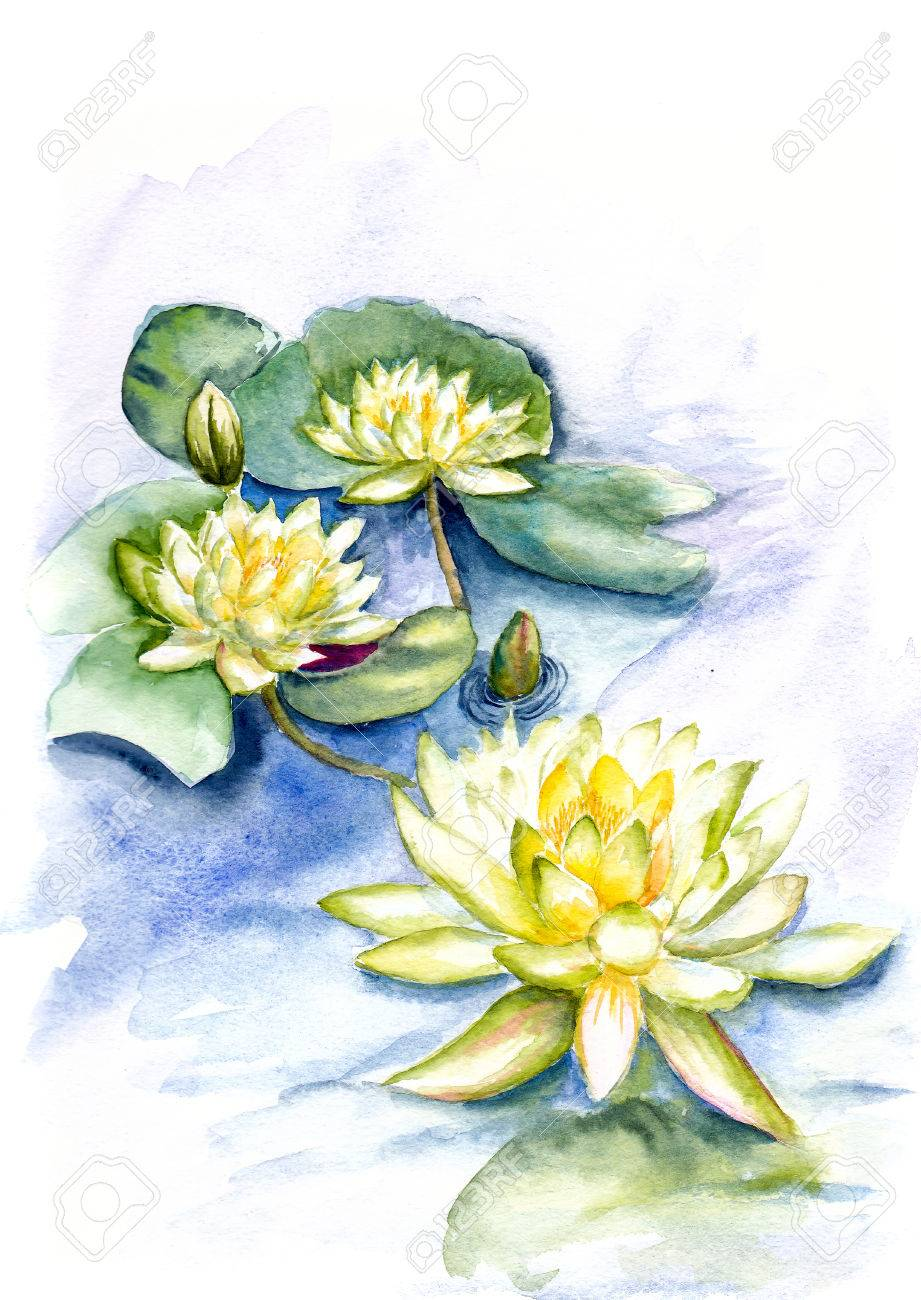 Water Color Painting As Lotus Flower In A Pool Stock Photo Picture
