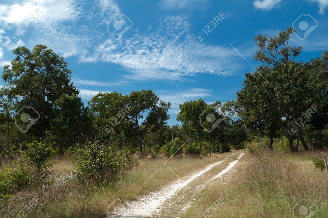 A car path accross the forest in the Kho khao island Thaland Stock Photo - 13198189