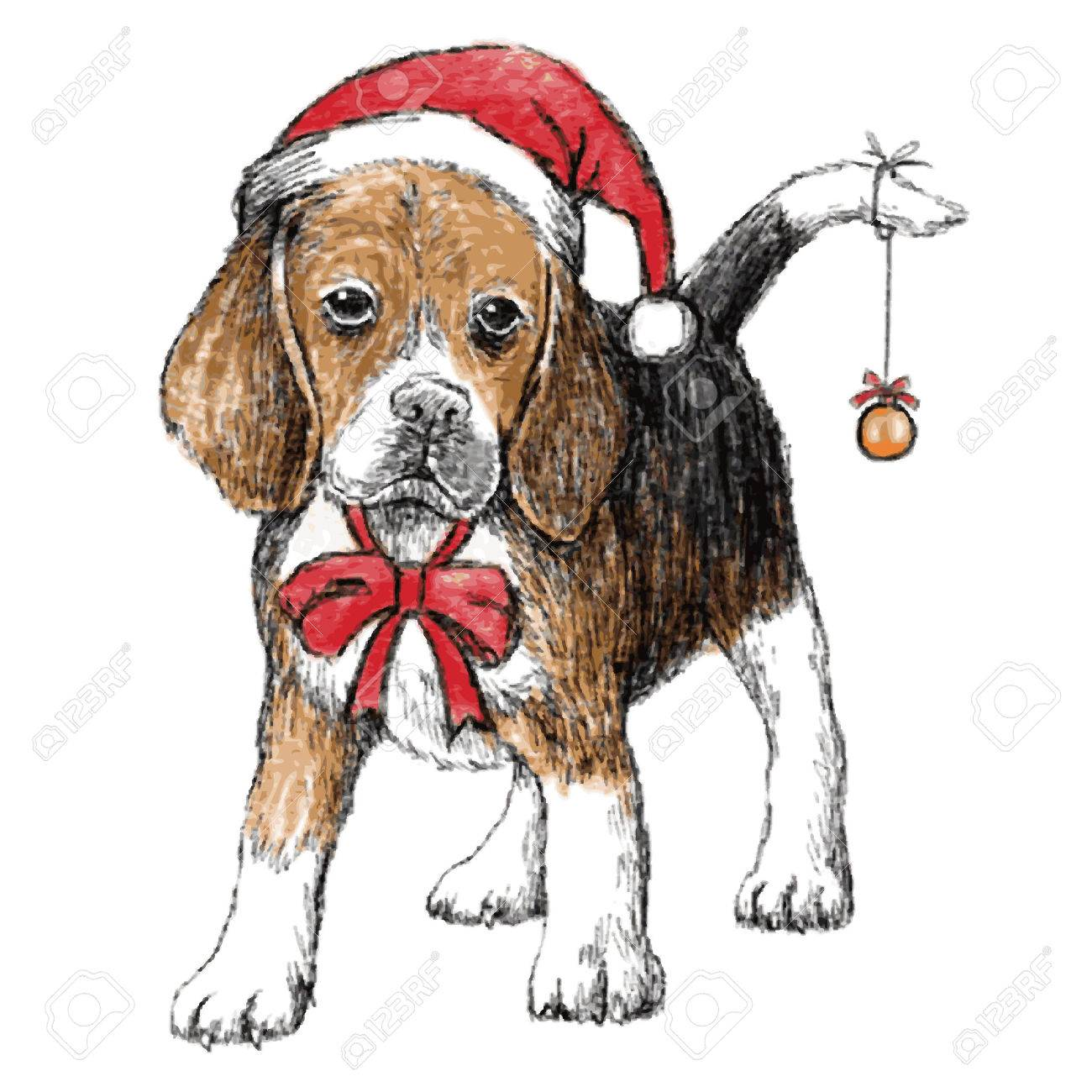 4ac2754f822 hand drawn vector of beagle with christmas hat on white background Stock  Vector - 34187488