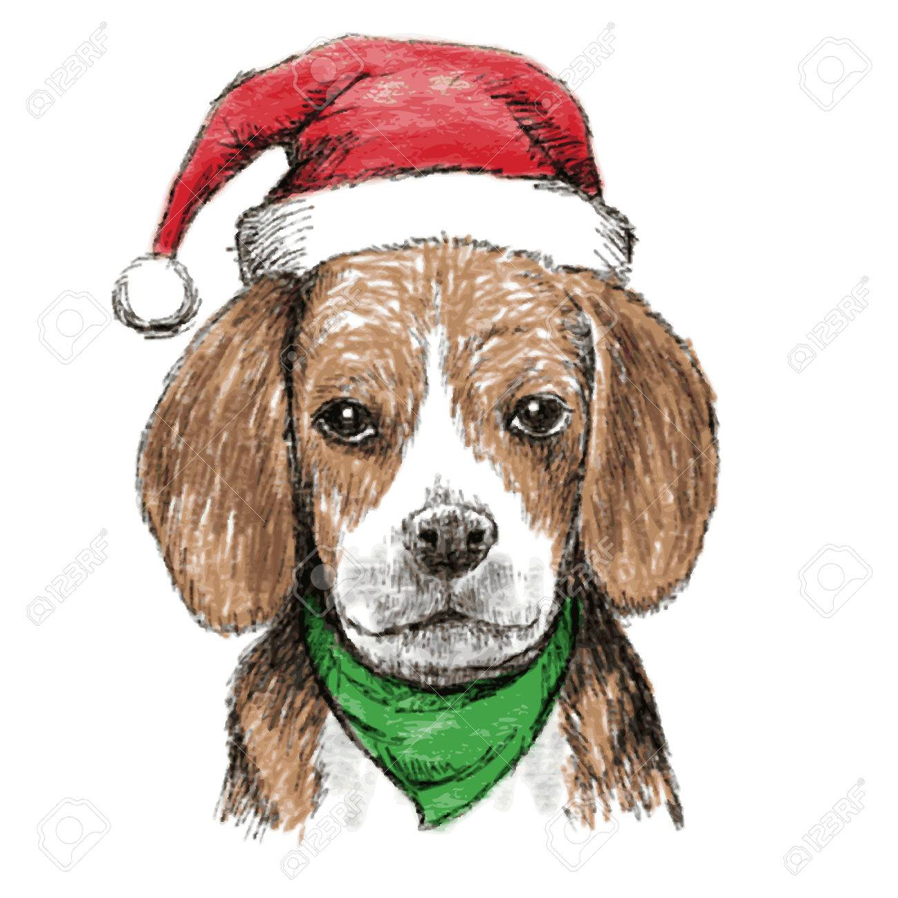 676099ad7c7 hand drawn vector of beagle with christmas hat on white background Stock  Vector - 34187152