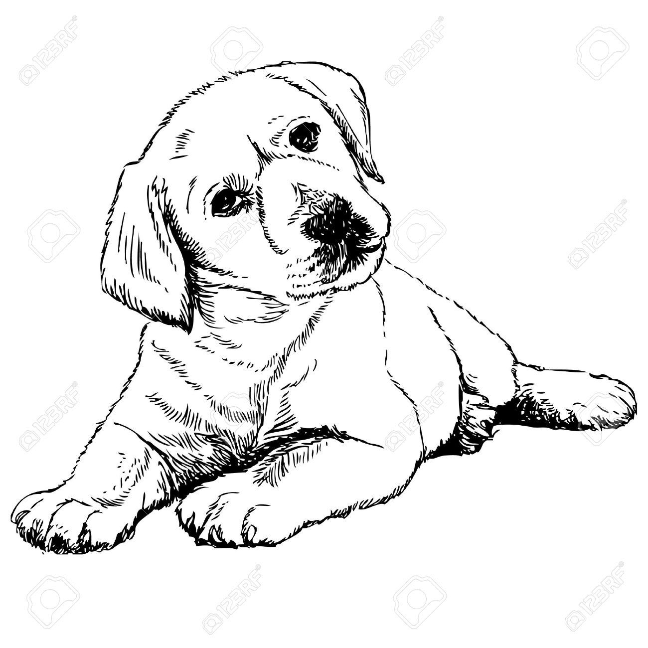Image Of Labrador Retriever Puppy Hand Drawn Vector Royalty Free