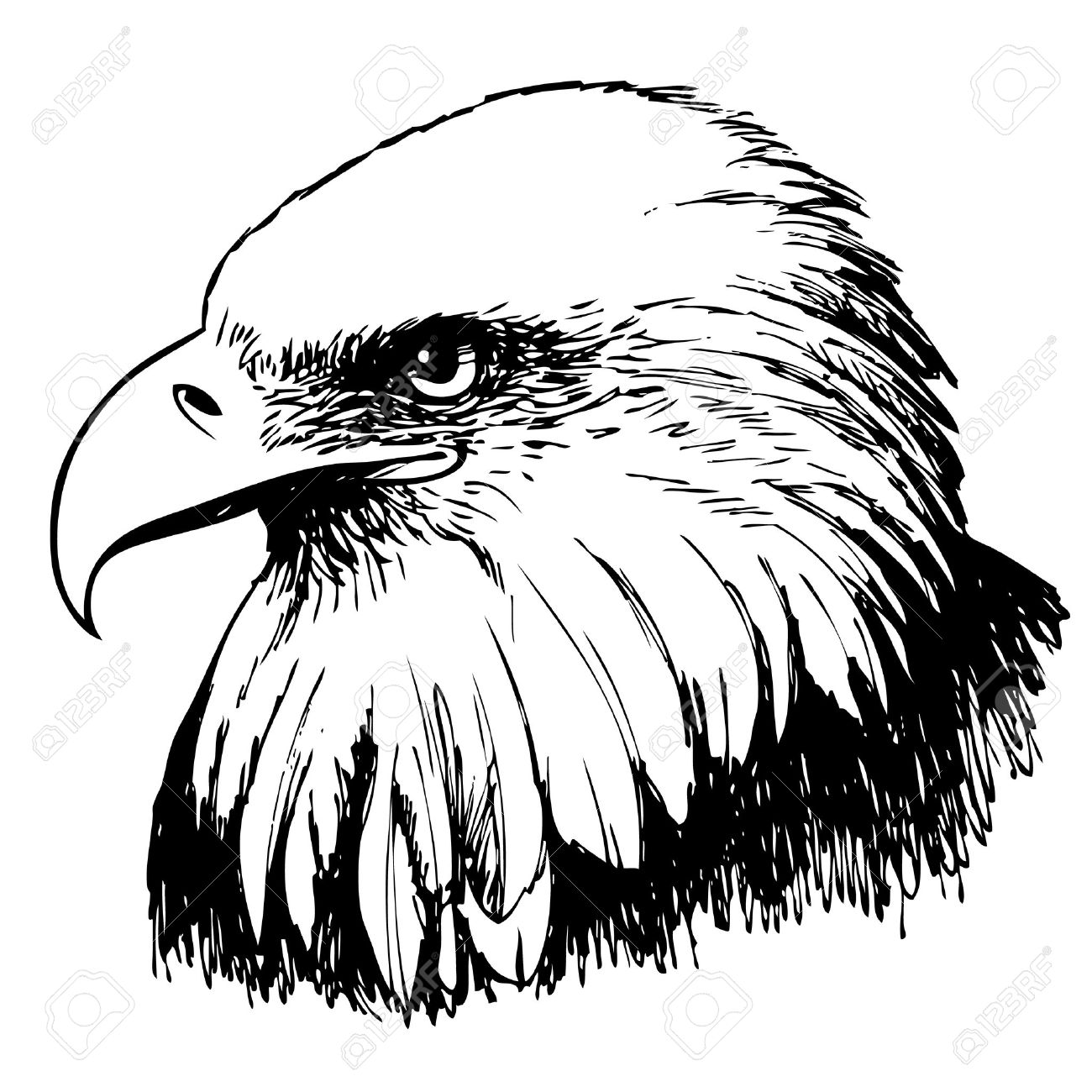 Black and white eagle hand drawn on white background stock vector 44260785