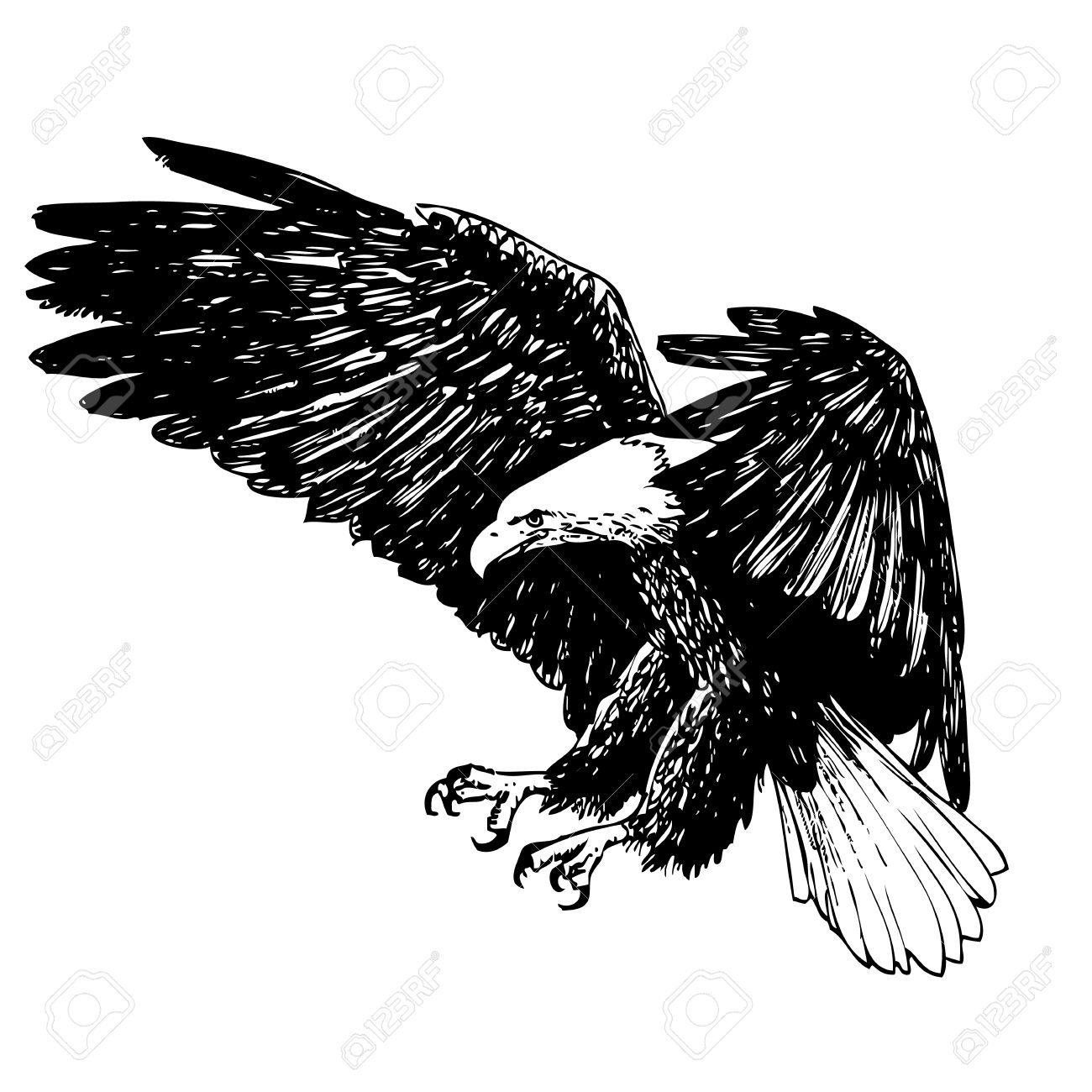 Black and white eagle hand drawn on white background stock vector 44260792