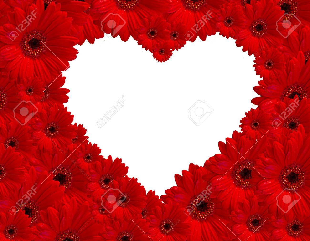 Red De Flores Gerberas Crear Imagenes Del Corazon En El Fondo Blanco