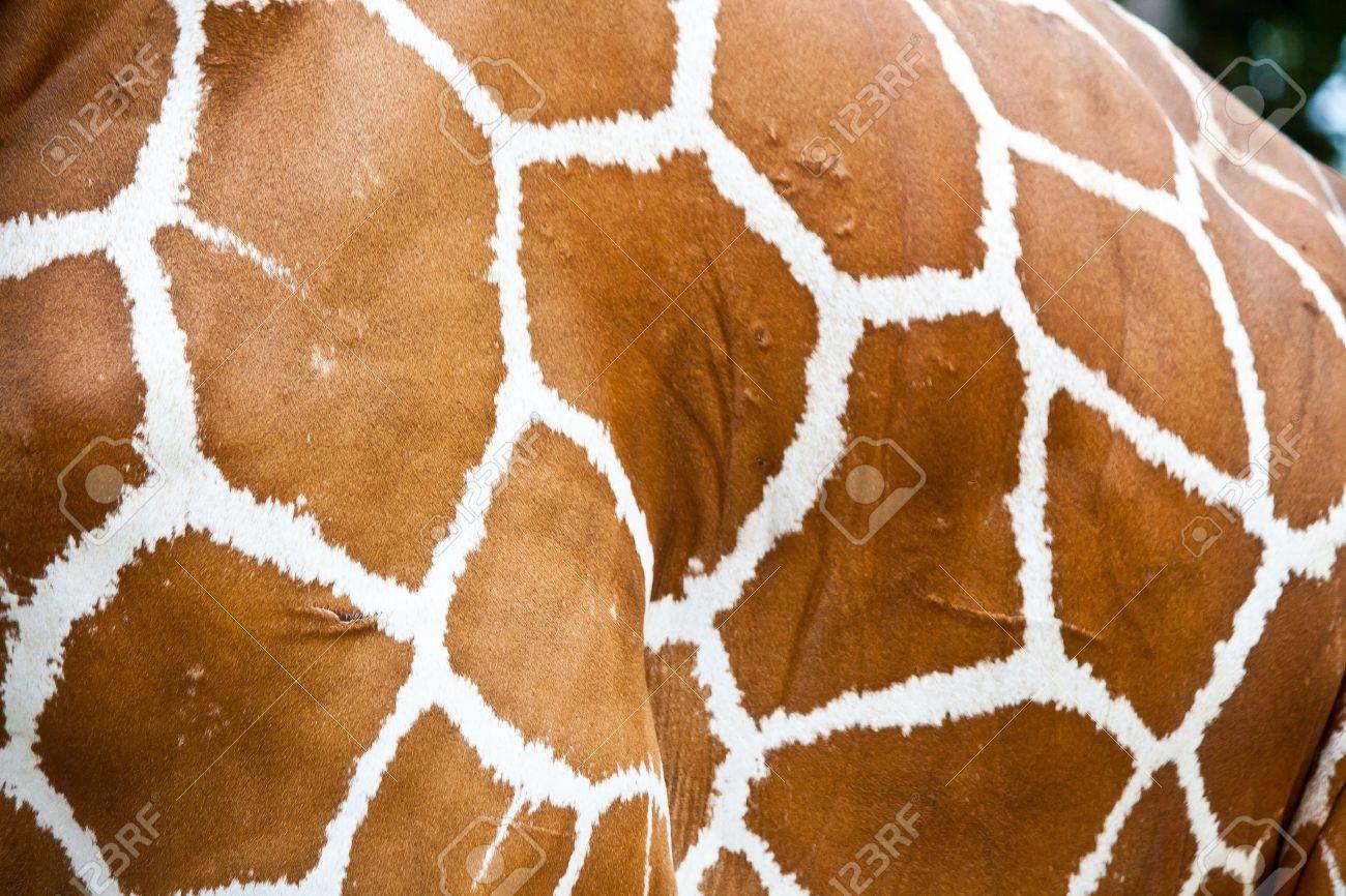 giraffe skin fur background Stock Photo - 15444460