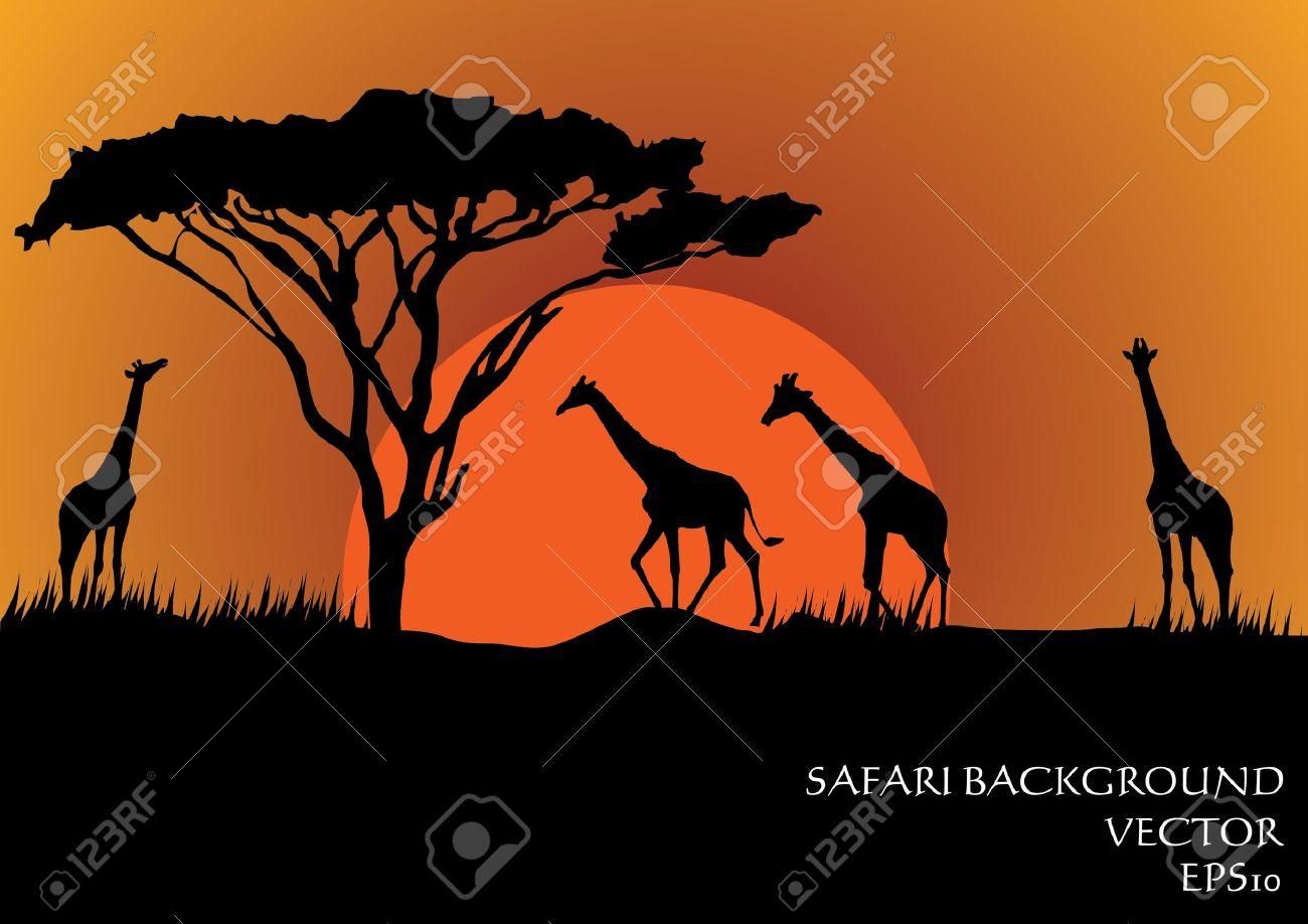 Silhouettes of giraffes in safari sunset background vector illustration Stock Vector - 16318797