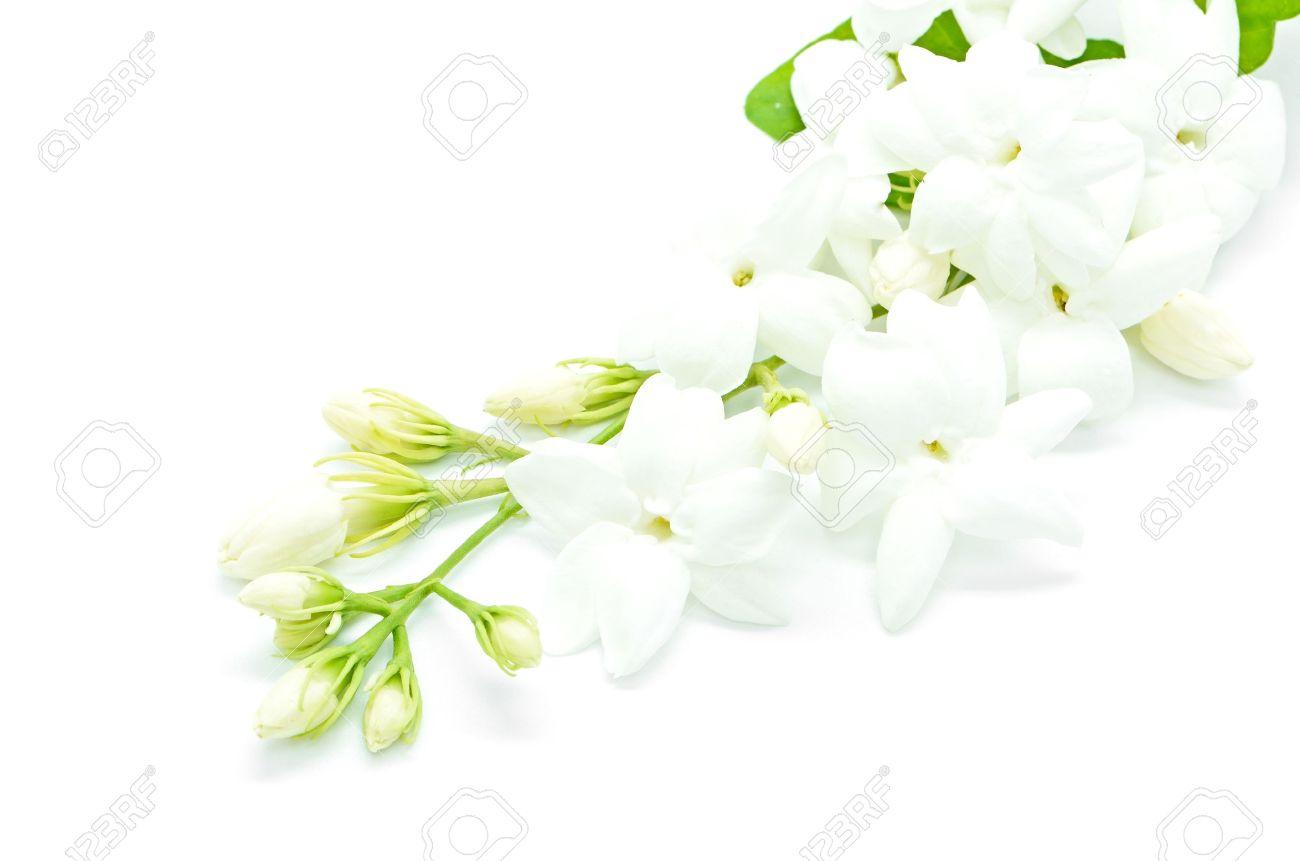 White jasmine flower isolated on a white background stock photo stock photo white jasmine flower isolated on a white background mightylinksfo Images