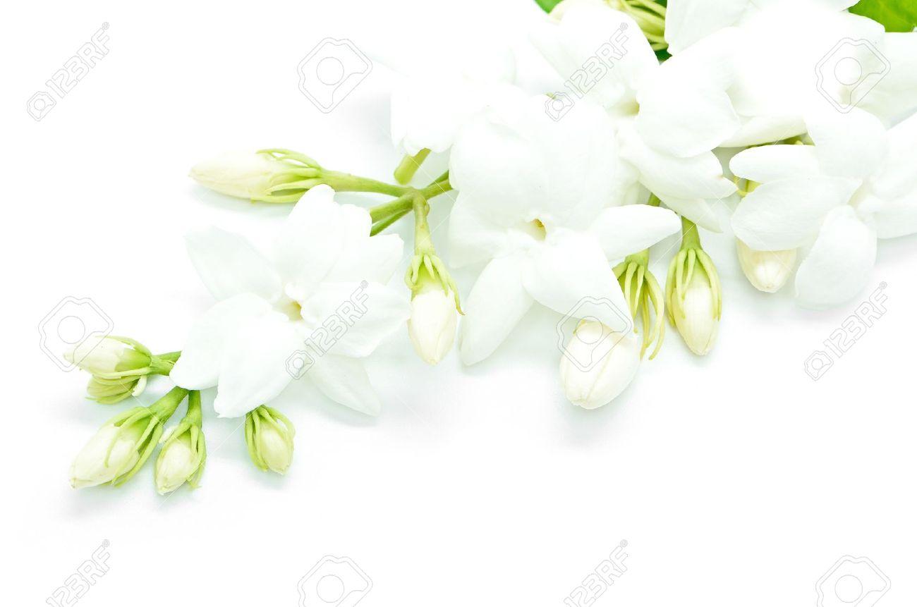 White jasmine flower isolated on a white background stock photo stock photo white jasmine flower isolated on a white background mightylinksfo