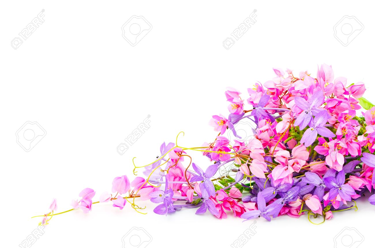 Summer Flowers Background Beautiful Pink And Purple Flower Stock