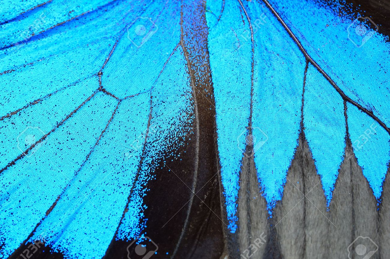 Blue butterfly wing, nature pattern texture background - 41250647