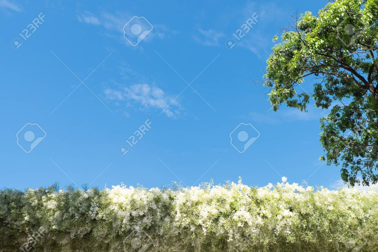 White Flowers Line And Tree With Blue Sky In The Morning Foto