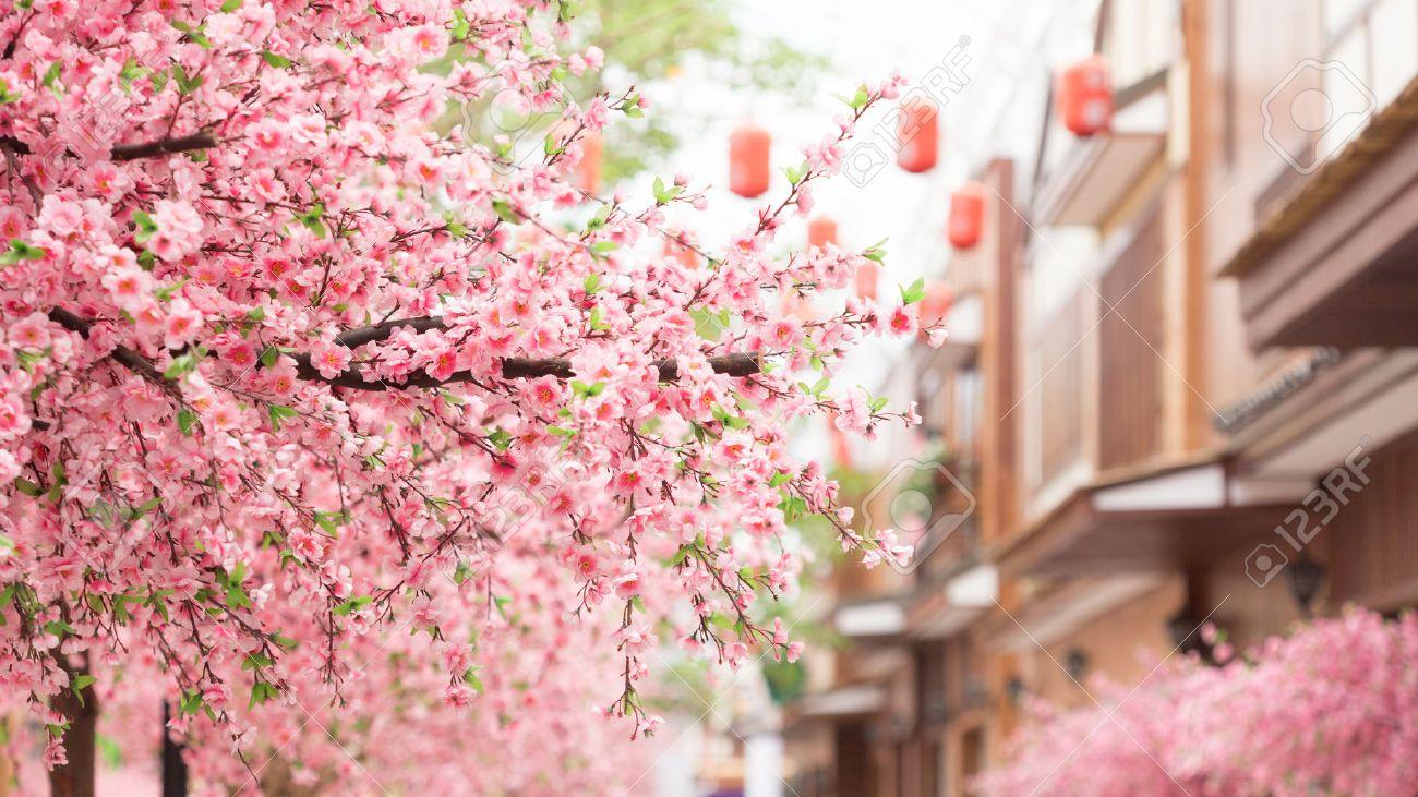 Beautiful pink cherry blossom sakura flower and with vintage beautiful pink cherry blossom sakura flower and with vintage japan building background stock photo dhlflorist Images