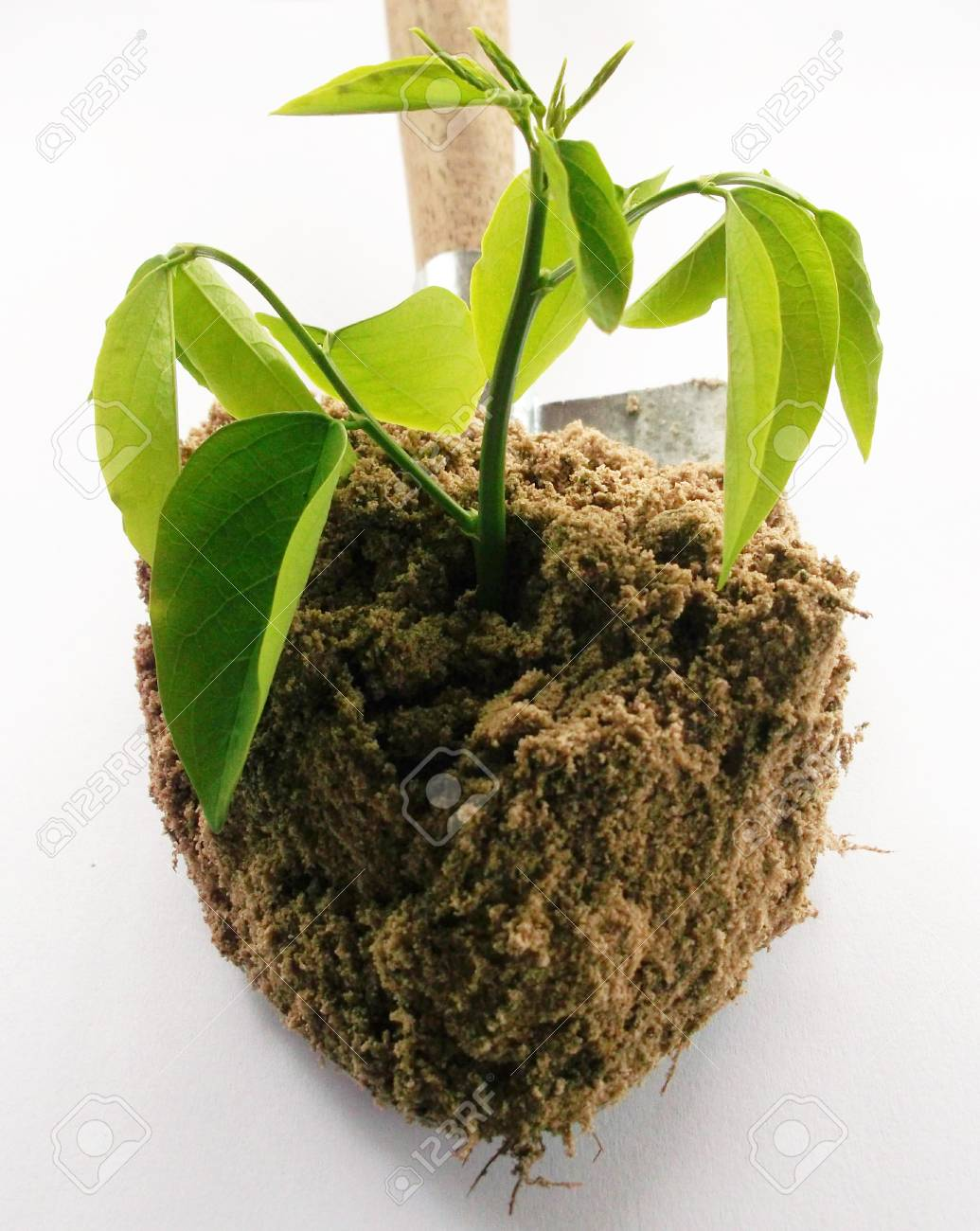 Young plant Stock Photo - 10862361