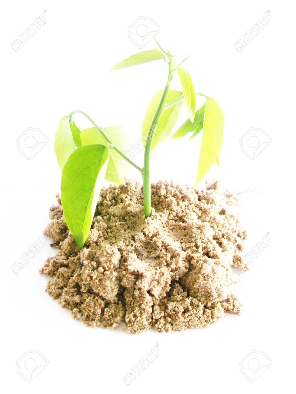 Young plant Stock Photo - 10862366