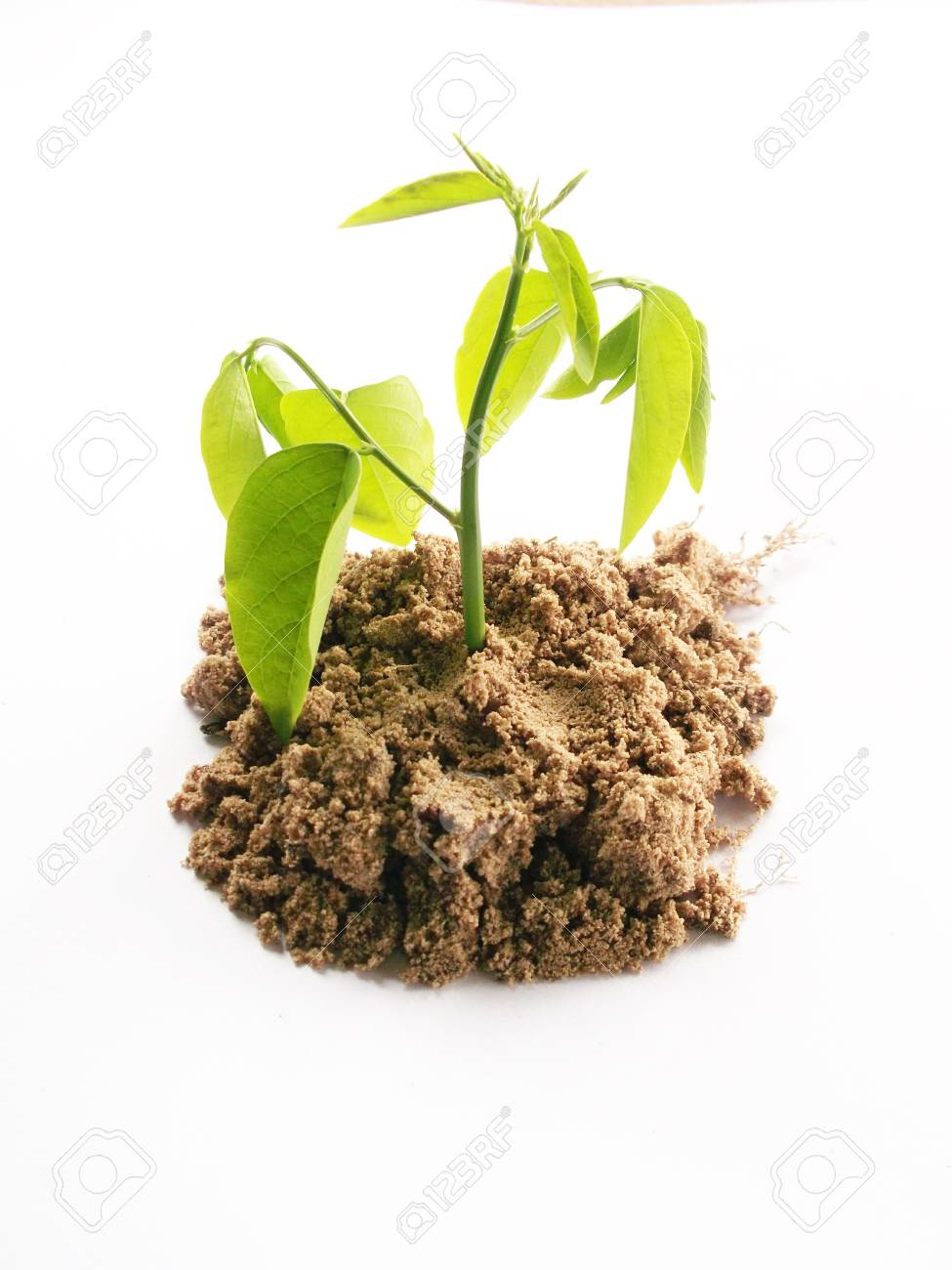 Young plant Stock Photo - 11756244