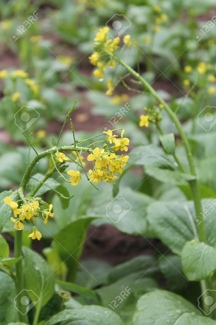 Vegetable garden Stock Photo - 18366523