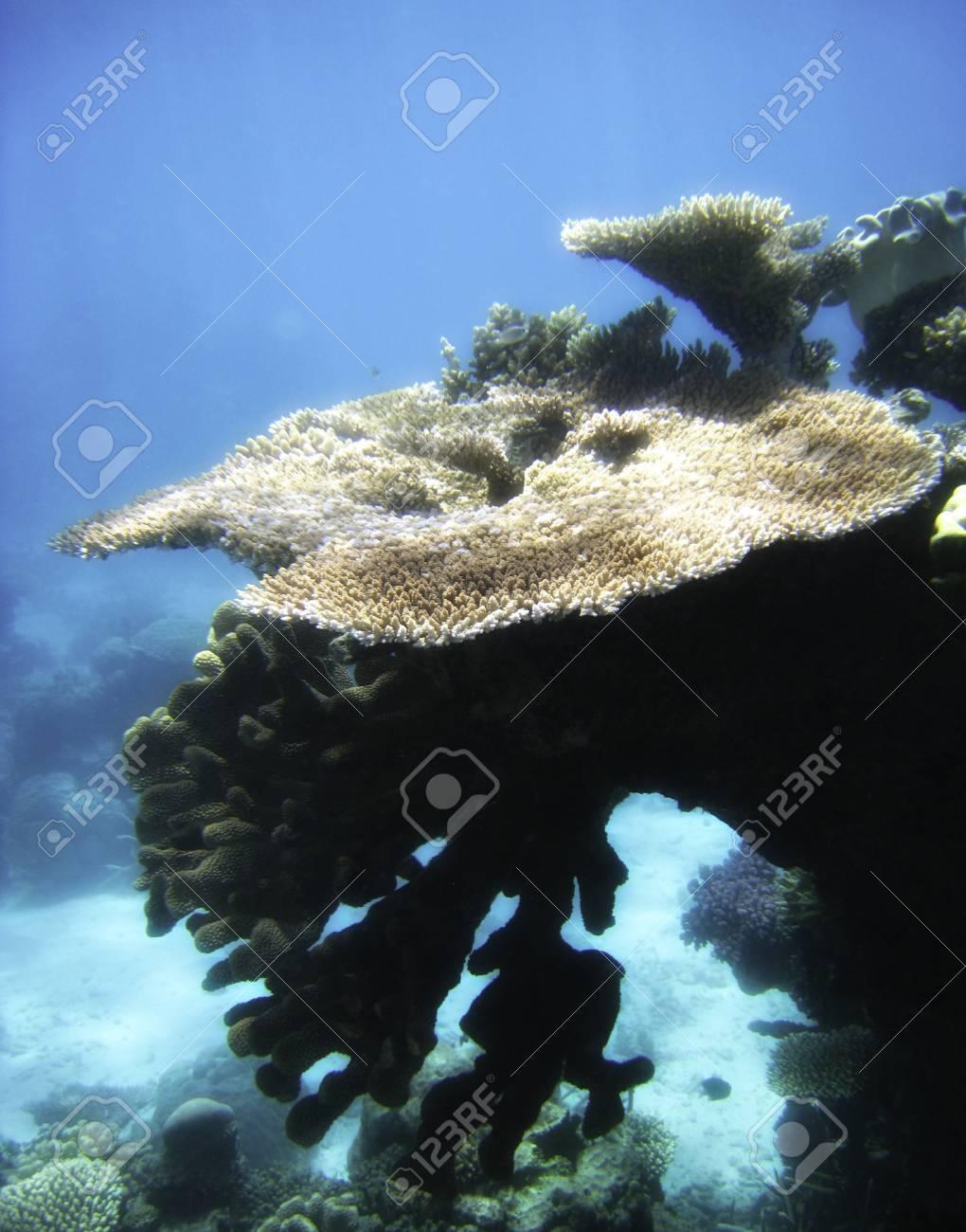 Underwater Scene of Great Barrier Reef in Queensland, Australia Stock Photo - 12172931