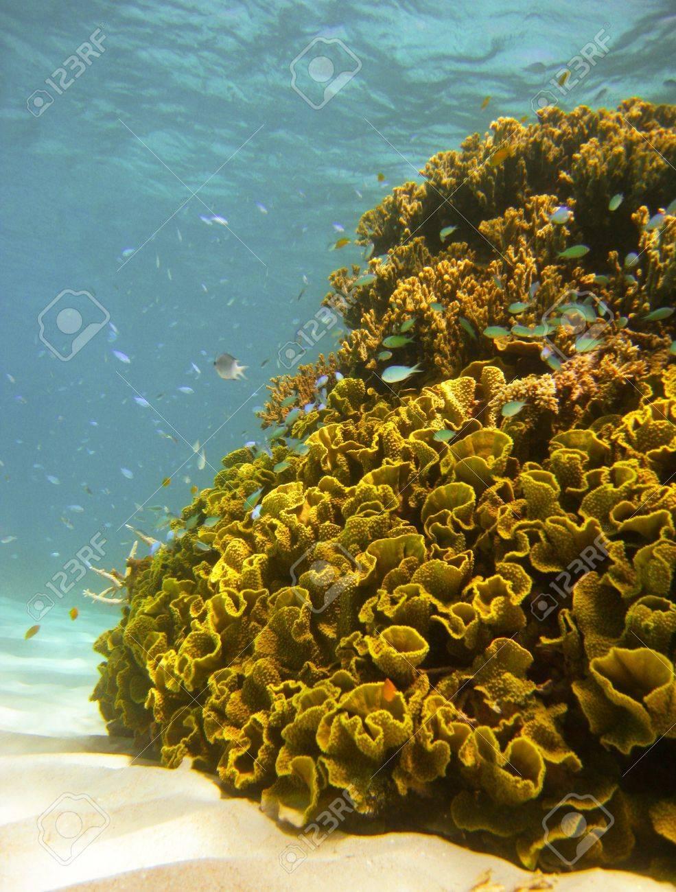 Underwater Scene of Great Barrier Reef in Queensland, Australia Stock Photo - 16387586