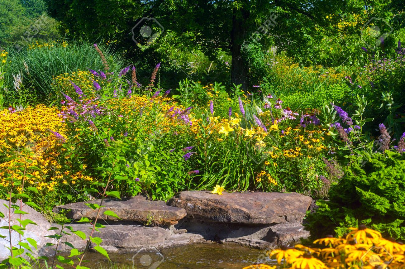 Butterfly Garden With Cutleaf Coneflowers And Butterfly Bush.. Stock ...