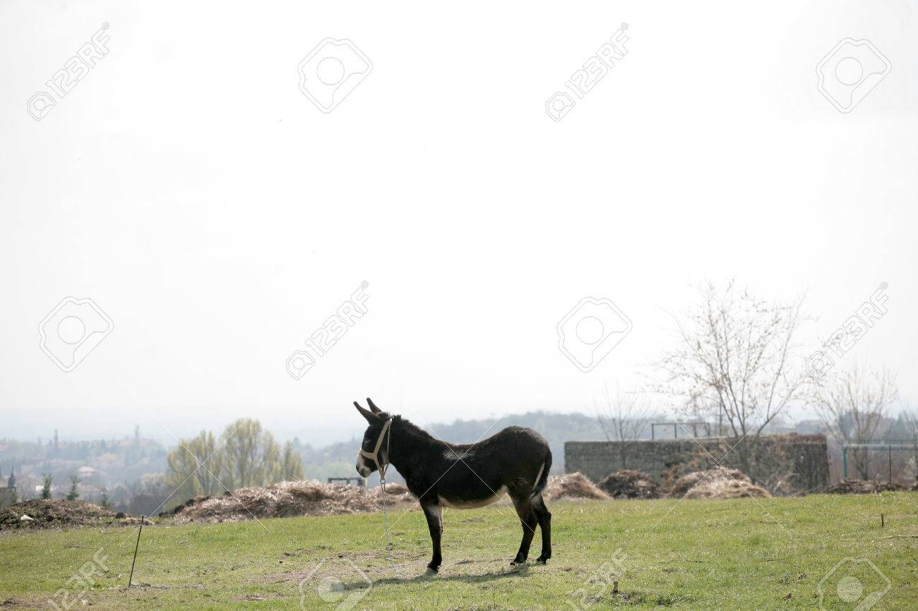 Village Landscape With Donkey Barnyard Stock Photo Picture And