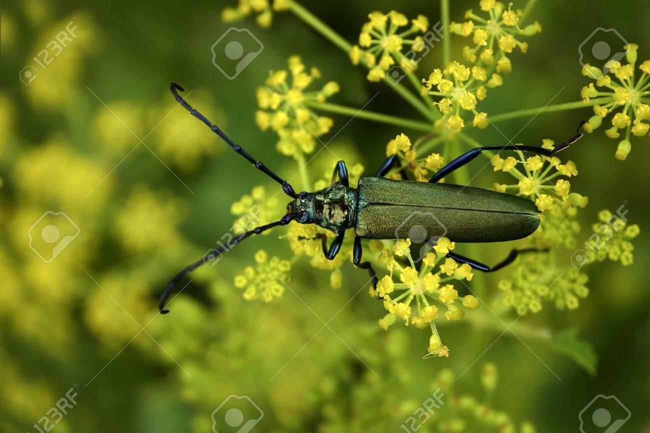 Bug Stock Photo - 2806304