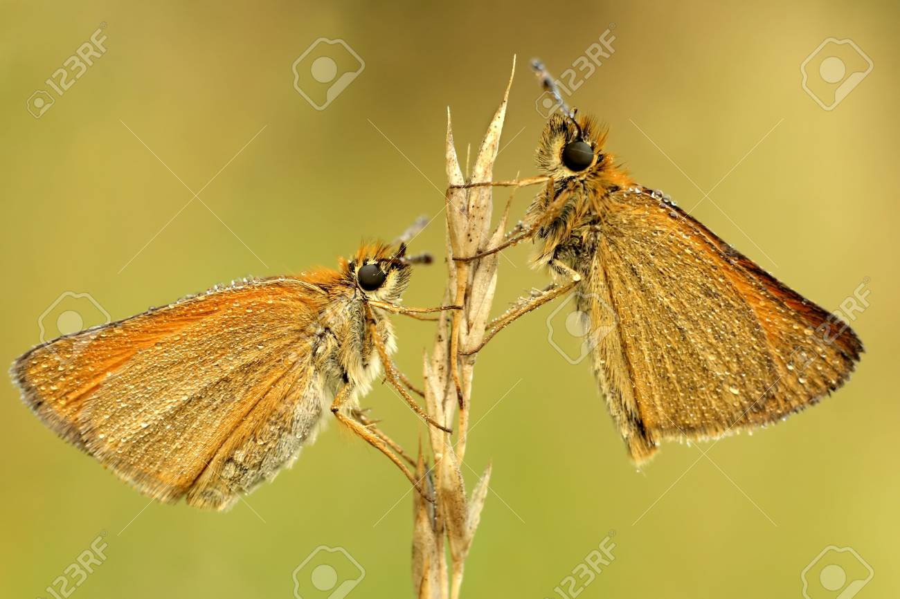 Butterfly Stock Photo - 2806307