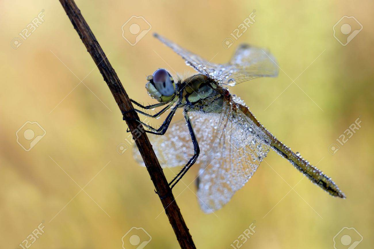 Dragonfly Stock Photo - 2927349