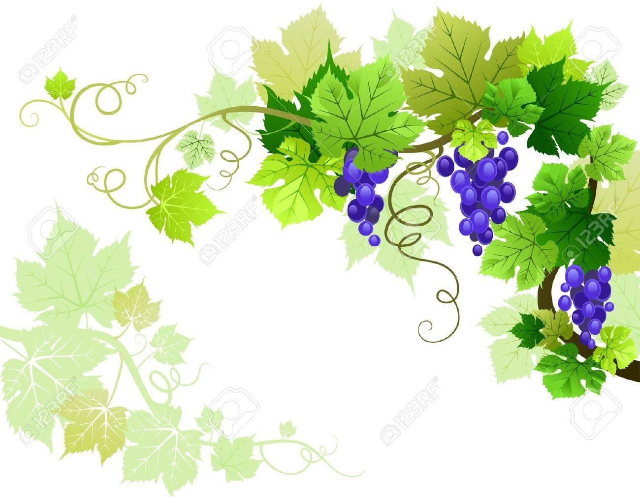 Grapes Stock Vector - 9580913