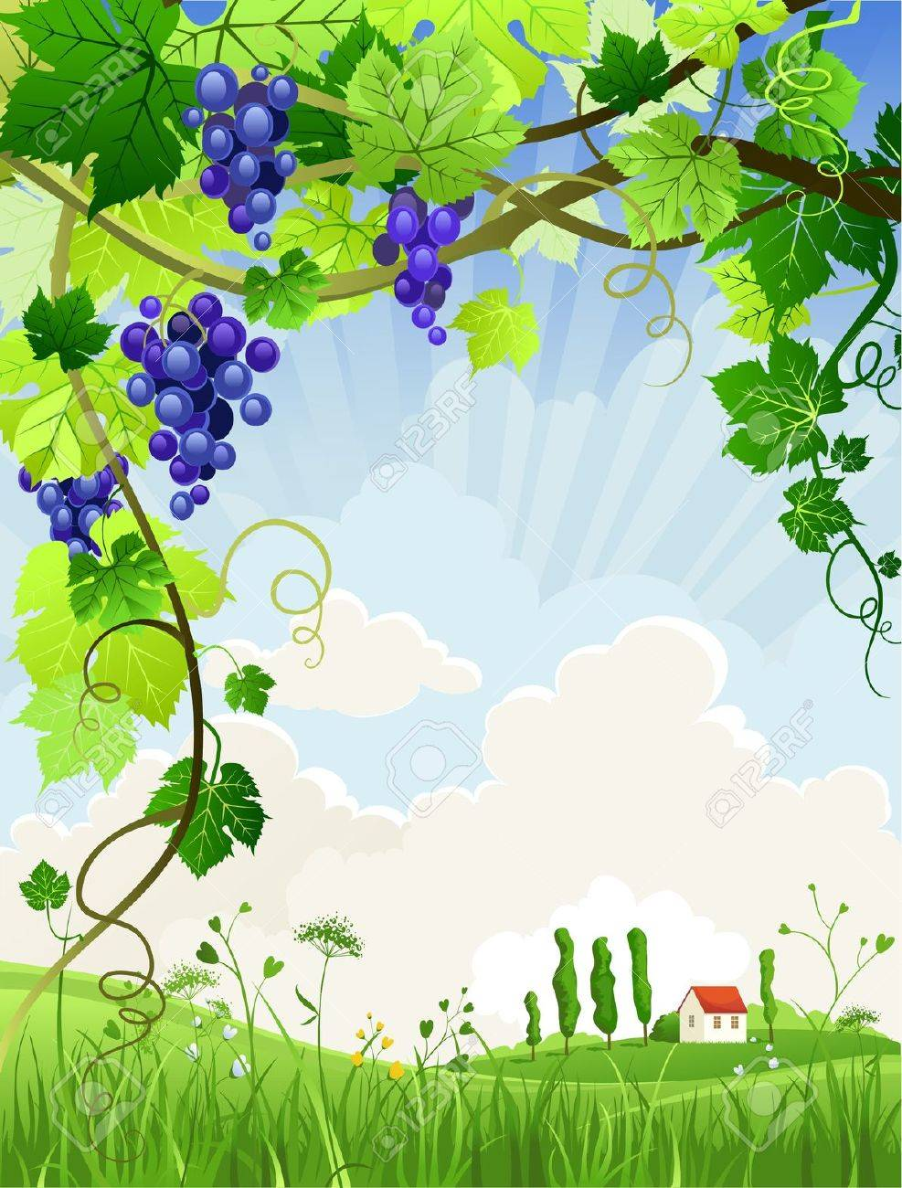 Beautiful landscape with a vineyard with space for text Stock Vector - 10585583