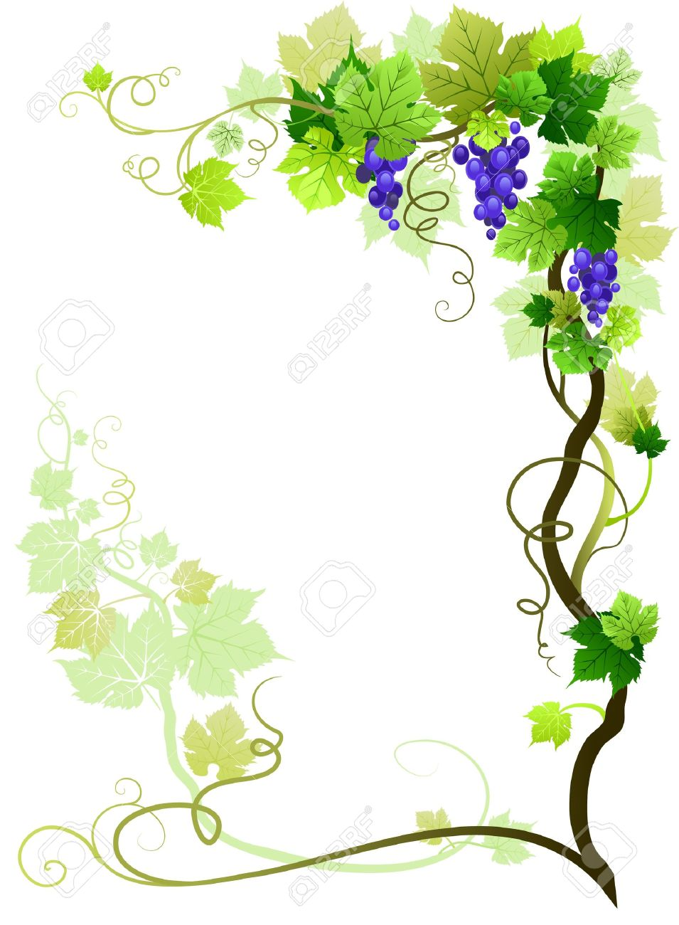 Vineyard frame with space for text Stock Vector - 10585579