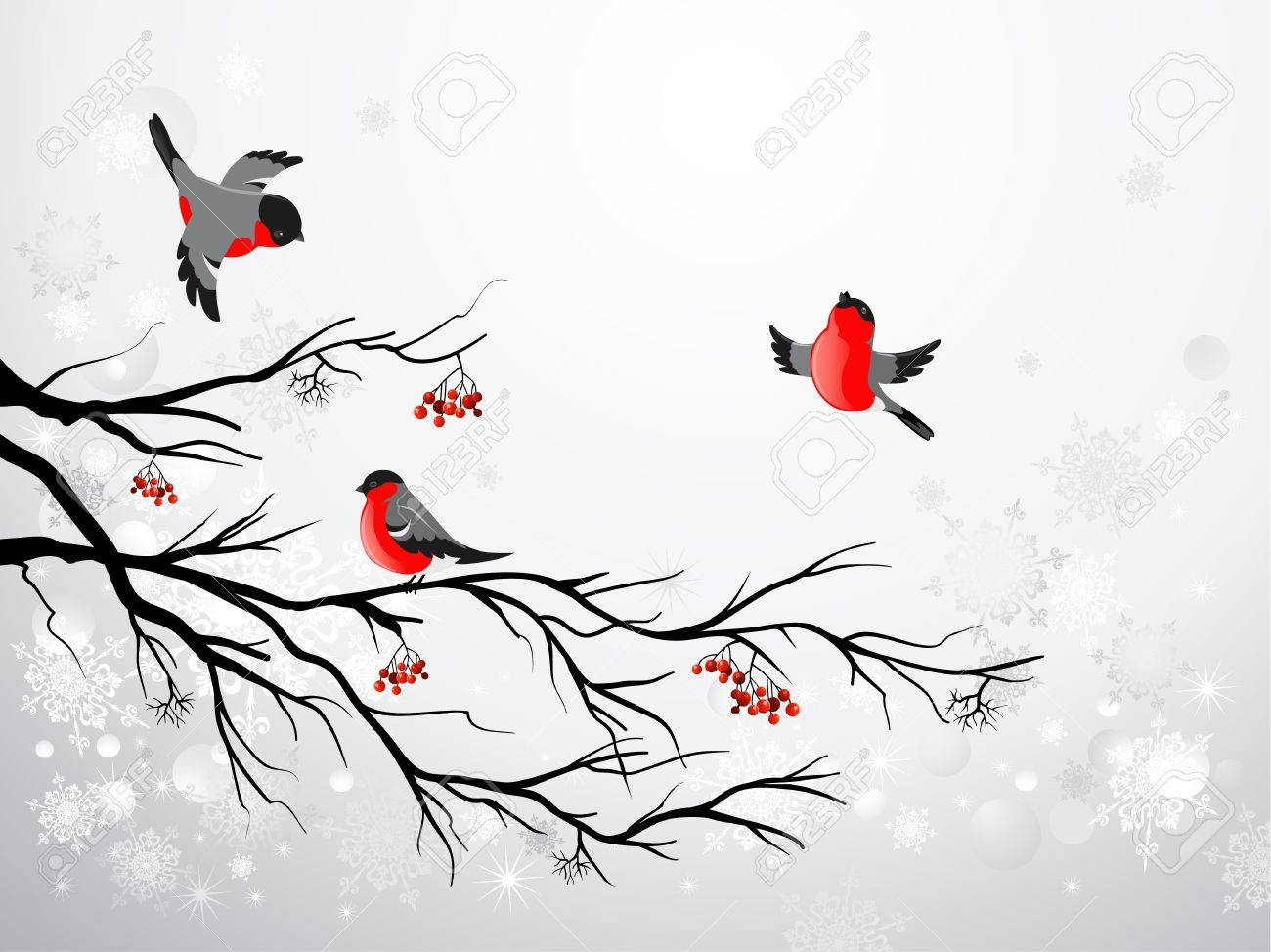 Branch and birds bullfinch with space for text Stock Vector - 11654915
