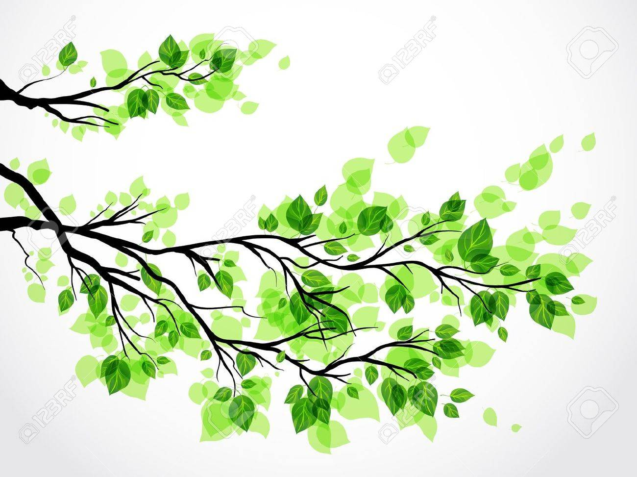 Branch with green leaves Stock Vector - 20544682