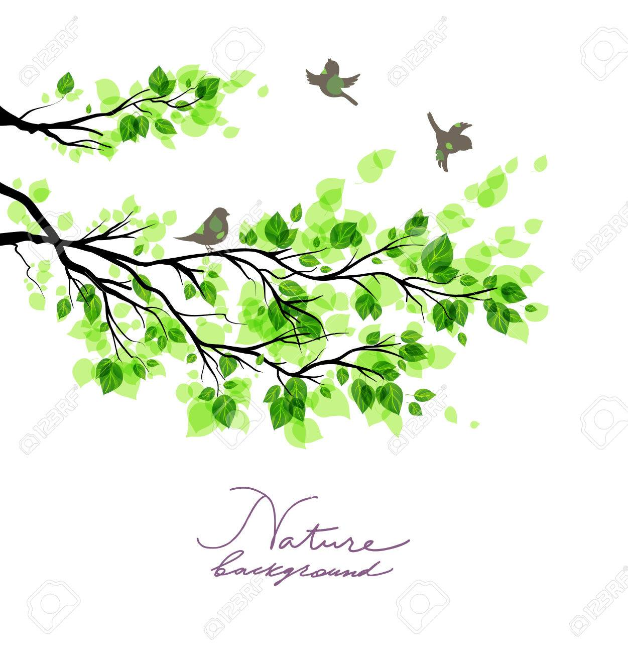 Birds with green branches. Summer or spring nature background with place for text. - 36401037